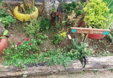 viver jardim 3