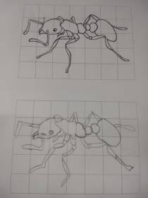 Foto 4: Desenho de uma formiga. Créditos: Carolina Maciel Mattos.